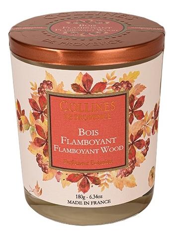 Купить Ароматическая свеча Flamboyant Wood (цветное дерево): Свеча 180г, Collines de Provence