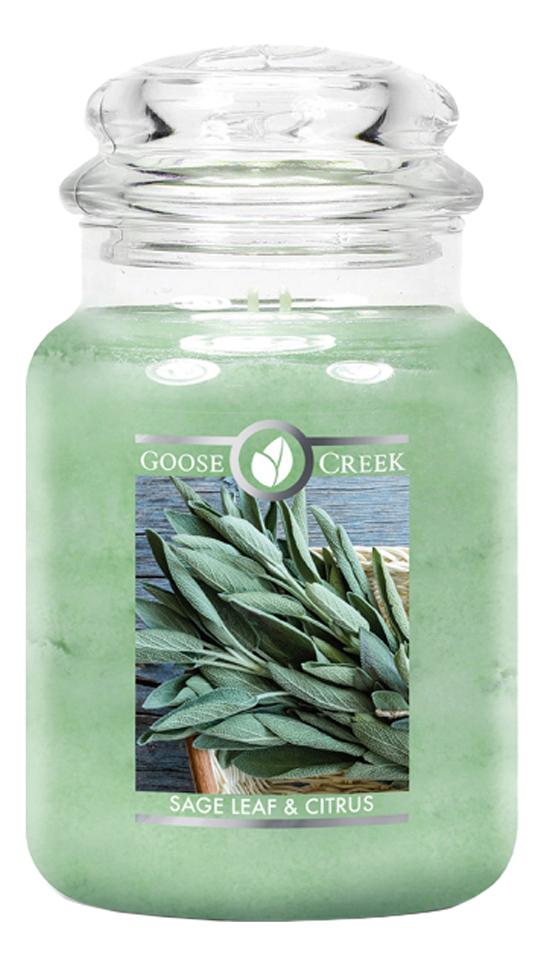 Ароматическая свеча Sage Leaf And Citrus (Шалфей и цитрус): 680г